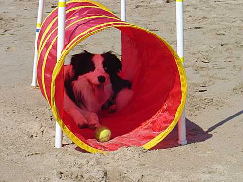 Diva in the play tunnel with her ball